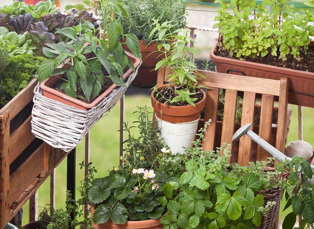 Garten Auf Balkon Gemüse Obst Und Kräuter Züchten